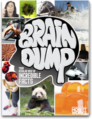 Brain Dump - Incredible Facts logo