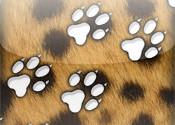 CheetahTrack logo
