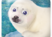 101 Seal Pets for Mac logo