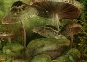 Hidden Garden Forest for Mac logo