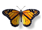 Monarch: The Butterfly King for Mac logo