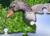 Puzzle! Animals for Mac logo